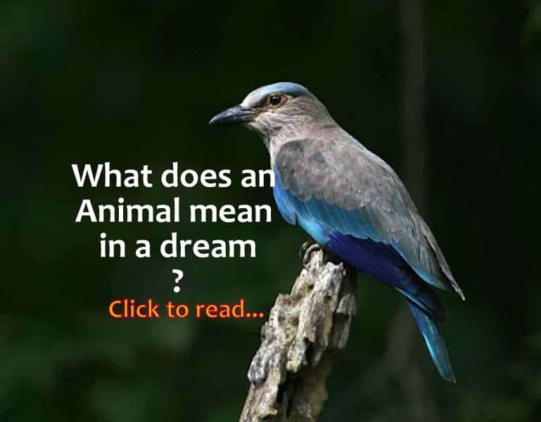 What Does An Animal Mean In A Dream Life In Vedas