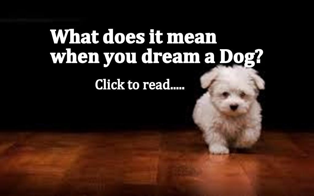 Dog Dreams Black White Brown Bite Attack Lost Dream Mean