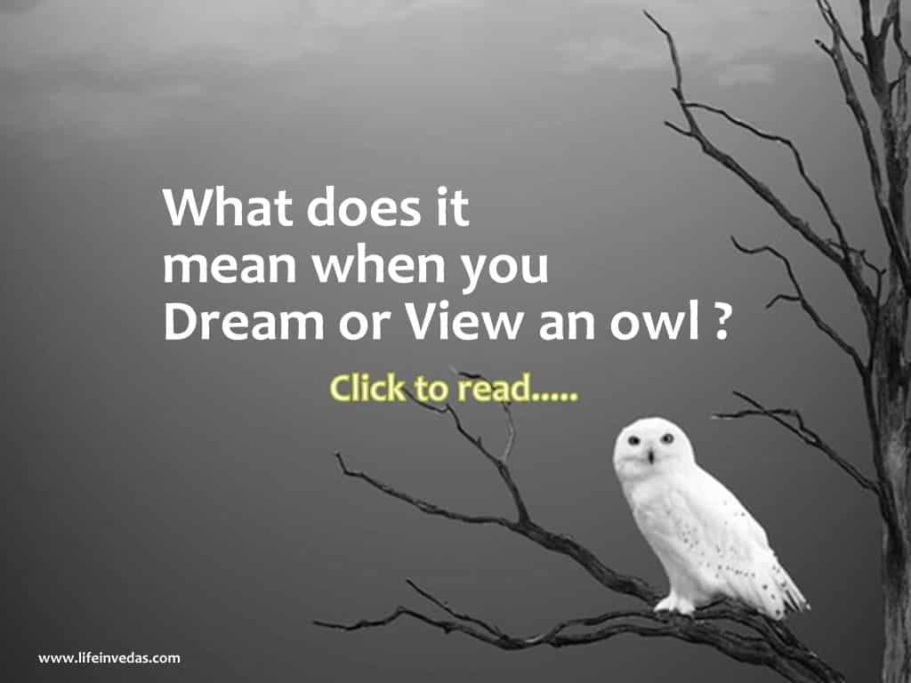 Owl Dream Meaning Of Injured White Dead And Baby Owls Life In Vedas